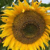Otepää Gümnaasiumi algklasside taimekasvatusest